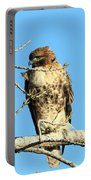Baby Bald Eagle Portable Battery Charger