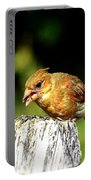 Baby Cardinal Portable Battery Charger