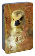 Baby Cuteness - Young Canada Goose Portable Battery Charger
