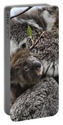 Baby Koala V2 Portable Battery Charger