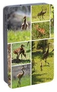 Baby Sandhills Collage Portable Battery Charger