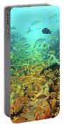Bahamas Shipwreck Fish Portable Battery Charger