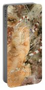 Banded Coral Shrimp Portable Battery Charger