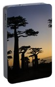 Baobab Forest At Sunset Portable Battery Charger