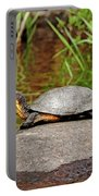 Basking Blanding's Turtle Portable Battery Charger
