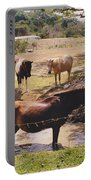 Bathing Horse Portable Battery Charger