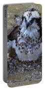 Bathing Osprey In Shallow Water Portable Battery Charger