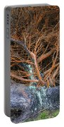 Battered Cypress With Orange Alga Portable Battery Charger