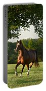 Bay Arabian Mare Portable Battery Charger