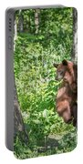 Bear Cub Climb Portable Battery Charger