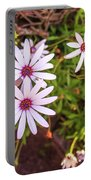Beautiful African White Daisies Portable Battery Charger