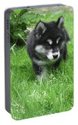 Beautiful Alusky Puppy Dog Walking Through Thick Green Grass Portable Battery Charger