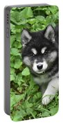 Beautiful Alusky Puppy Peaking Out Of Green Foliage Portable Battery Charger