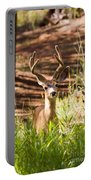 Beautiful Buck Deer In The Pike National Forest Portable Battery Charger