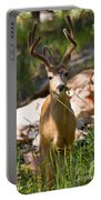 Beautiful Buck In The Pike National Forest Portable Battery Charger