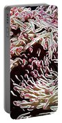 Beautiful Coral Reef  1 Portable Battery Charger