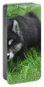 Beautiful Face Of A Black And White Alusky Puppy Portable Battery Charger