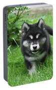 Beautiful Face Of An Alusky Puppy Dog In Thick Green Grass Portable Battery Charger