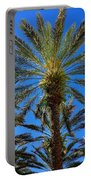 Beautiful Florida Palm Trees Portable Battery Charger