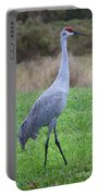Beautiful Sandhill Crane Portable Battery Charger by Carol Groenen