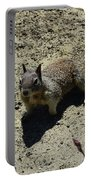 Beautiful Squirrel Standing In A Sandy Area In California Portable Battery Charger