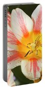 Beautiful Tulip With A Yellow Center And Pink Striped Petals Portable Battery Charger