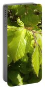 Beech Hedge In Spring Portable Battery Charger