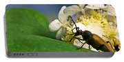 Beetle Preening Portable Battery Charger