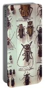 Beetles Portable Battery Charger