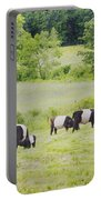 Belted Galloway Cows Rockport Maine Poster Prints Portable Battery Charger