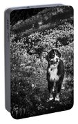 Bernese Mountain Dog Black And White Portable Battery Charger