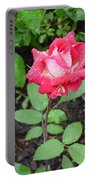Bi-colored Rose In Rain Portable Battery Charger
