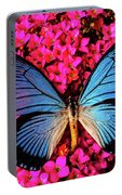 Big Blue Butterfly On Kalanchoe Flowers Portable Battery Charger