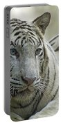 Big Cats 117 Portable Battery Charger