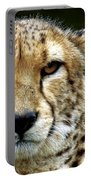 Big Cats 51 Portable Battery Charger