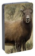 Big Horn Ewe-signed-#7480 Portable Battery Charger