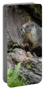 Big Tree Trail - Marmot - Sequoia National Park - California Portable Battery Charger