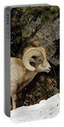 Bighorn In The Rockies Portable Battery Charger