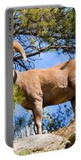 Bighorn Sheep In The San Isabel National Forest Portable Battery Charger