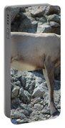 Bighorn Sheep Lamb Portable Battery Charger