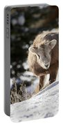 Bighorned Yearling - King Of The Hill Portable Battery Charger
