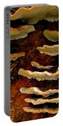 Birch Bracket Fungus Portable Battery Charger
