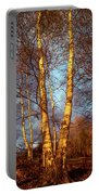 Birch Tree In Golden Hour Portable Battery Charger