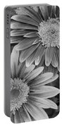 Black And White Gerber Daisies 2 Portable Battery Charger