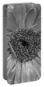 Black And White Gerbera Daisy Portable Battery Charger