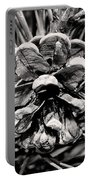 Black And White Pine Cone Wall Art Portable Battery Charger