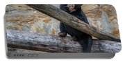 Black Bear Cub Sitting On Tree Trunk Portable Battery Charger