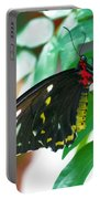 Black Butterfly Portable Battery Charger