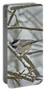Black Capped Chickadee - Poecile Atricapillus Portable Battery Charger
