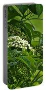 Black Elderberry - Sambucus Nigra_0261black Elderberry - Sambucus Nigra Portable Battery Charger